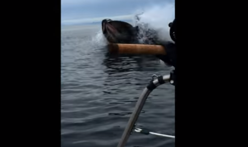 Humpback Whale Almost Takes Out a Boat